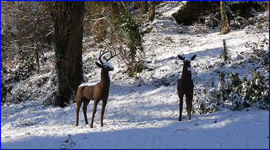 The deer in snow