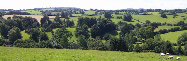 View across the valley from Budleigh Farm